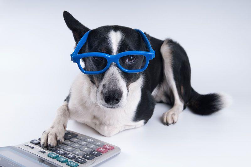 Charles Hirlinger's Under-Utilized Pet Tax Deductions
